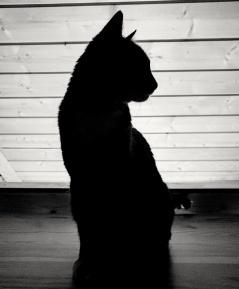 cat-1502290314Ko4
