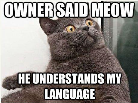 Cat_Meme.jpg